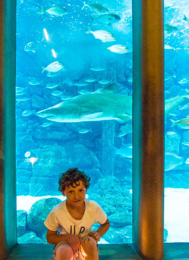 Aksel forran en sandtigerhai på A Coruña Aquarium