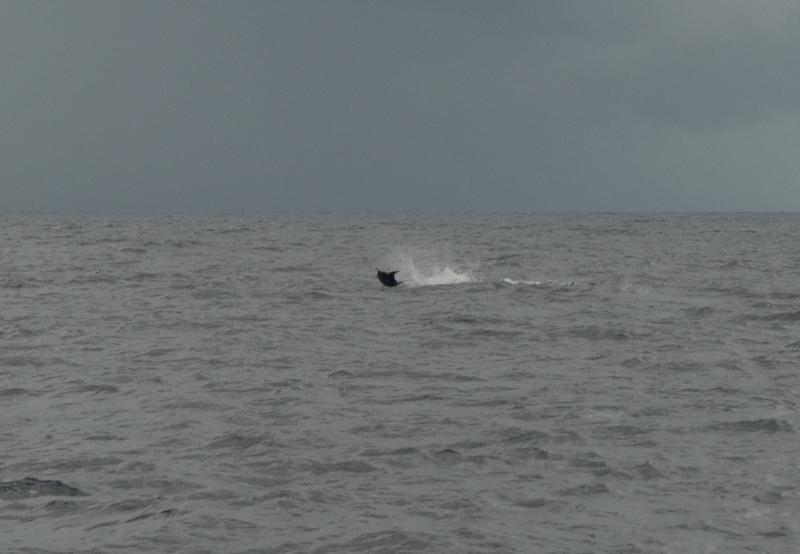 Hva er det vi har fått på kroken? Kan det være en Blue Marlin?