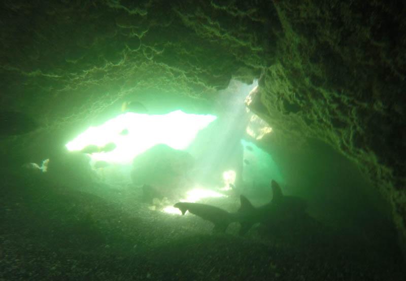 Å snorkle inn i huler med haier lengre enn deg selv er spennende!
