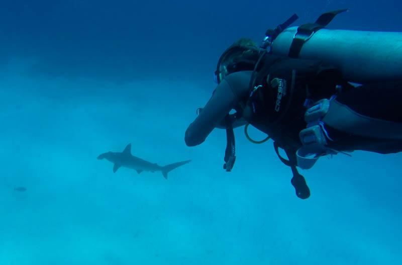 Å dykke med Hammerhai var en drøm for oss alle