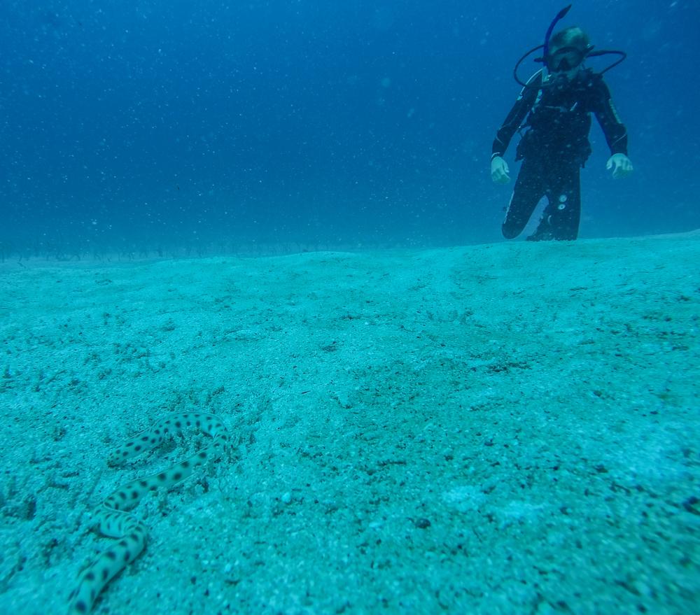 Møter min andre sjøslange. Denne gangen som dykker. Holder meg litt på avstand selv om denne ikke var farlig
