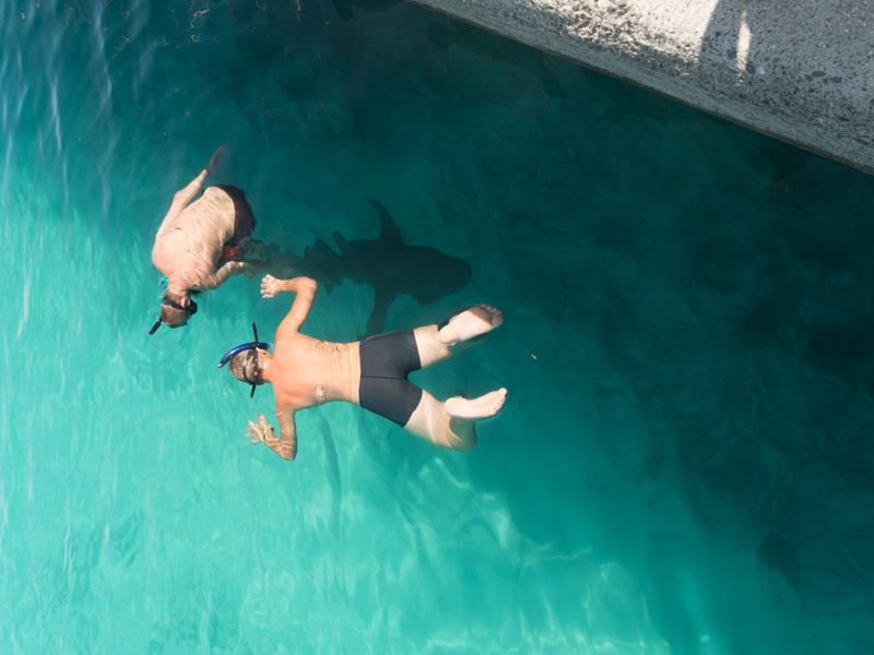 Men det går jo fint å svømme med den selv om den er større enn oss!