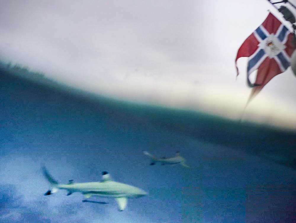 De norske patriotene ombord liker spesielt godt dette bildet som dansken tok. Bildet er en skjermdump fra det øyeblikket GoPro-kamereaet blir senket i vannet. Det har måttet tåle hard Photoshop'ing for å kunne vise haien i det hele tatt.