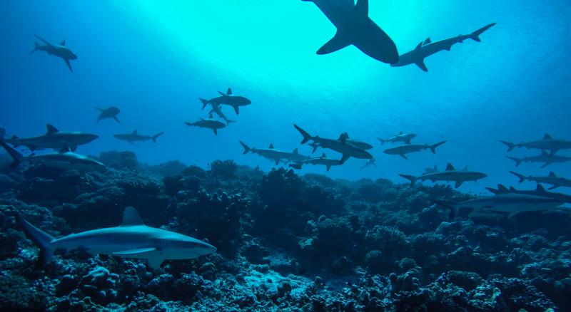 Det var ganske mange haier der....