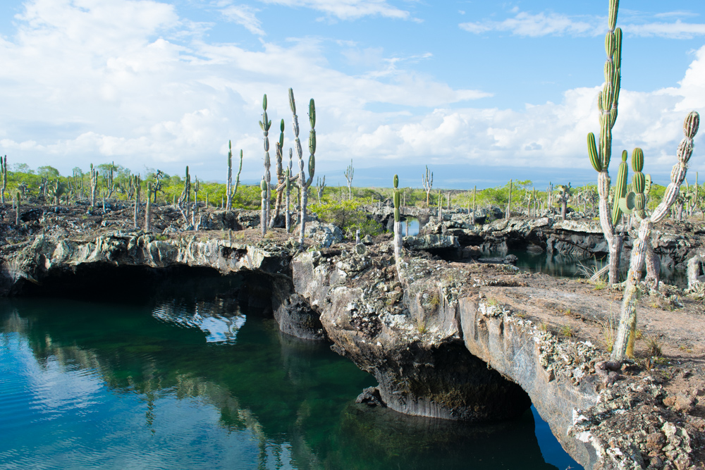 Dert finnes en del Spennede planter på Galapagos også, men det er mer mammas bord