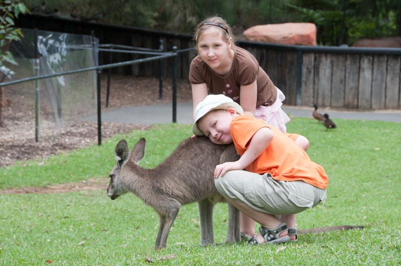 Våre to eldste med en ganske tam østlig grå kenguru