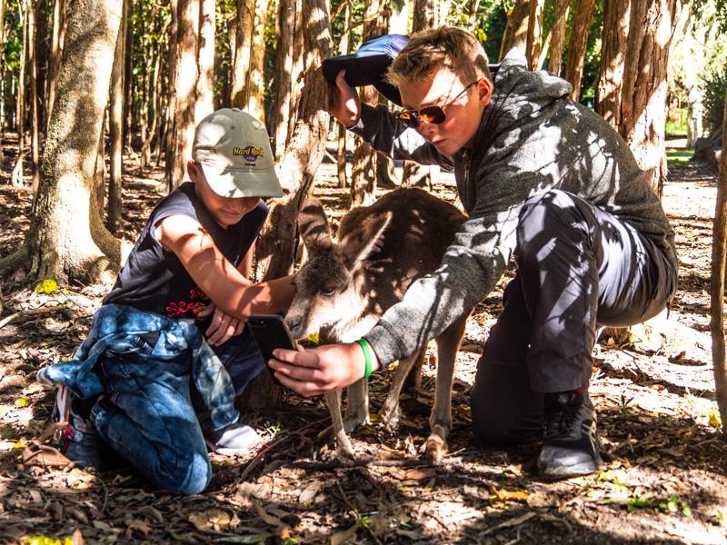 Hva er vel bedre enn å ta selfie med en kenguru?